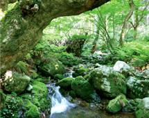 水源の里百選 毛無山ブナ林